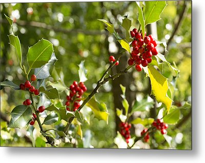 Holly With Berries Metal Print by Chevy Fleet