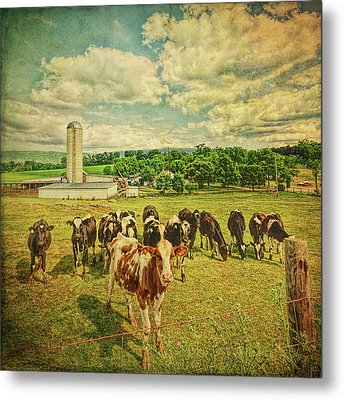 Metal Print featuring the photograph Holy Cows by Lewis Mann