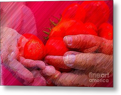 Homegrown Red Ripe Tomatoes Metal Print by Lewis Lang