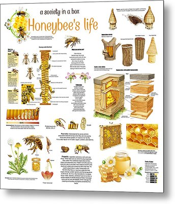 Metal Print featuring the drawing Honey Bees Infographic by Gina Dsgn