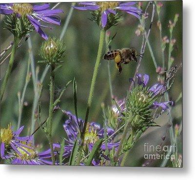 Honeybee 2 Metal Print
