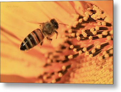 Metal Print featuring the photograph Honeybee And Sunflower by Chris Berry