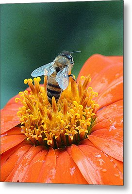 Honeybee On Orange Flower Metal Print