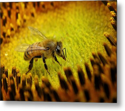 Metal Print featuring the photograph Honeybee On Sunflower by Chris Berry