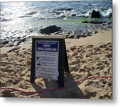 Honu Feeding And Basking Metal Print by Grant Wiscour