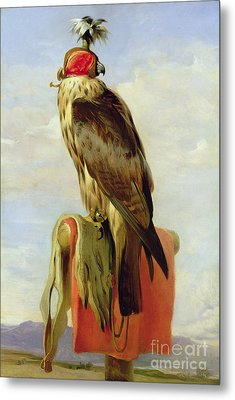 Hooded Falcon Metal Print