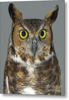 Metal Print featuring the photograph Hoot-owl - I'm Looking At You by Merton Allen