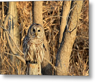 Hooter Metal Print by Thomas Danilovich