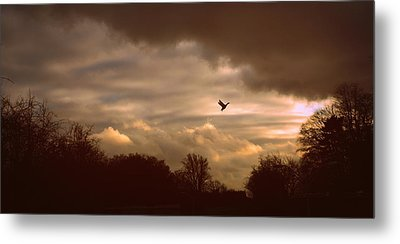 Metal Print featuring the photograph Hope by Jessica Jenney