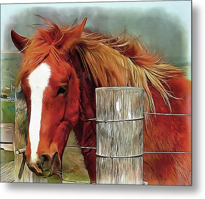 Give Me A Carrot Metal Print by Dorothy Berry-Lound