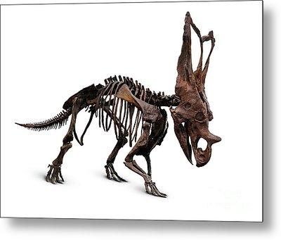 Horned Dinosaur Skeleton Metal Print by Oleksiy Maksymenko