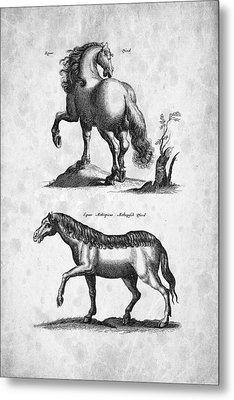 Horse 02 Historiae Naturalis 1657 Metal Print by Aged Pixel