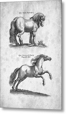 Horse 03 Historiae Naturalis 1657 Metal Print by Aged Pixel