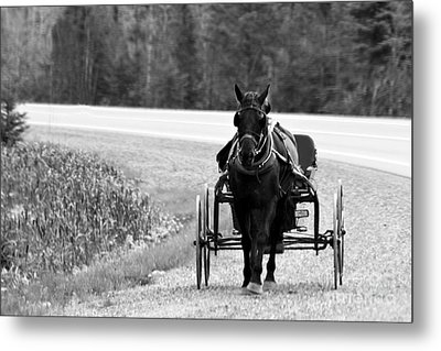 Metal Print featuring the photograph Horse And Buggy by Marjorie Imbeau