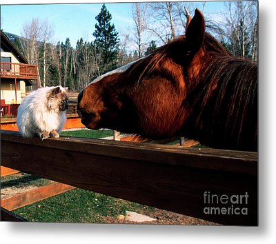 Horse And Cat Nuzzle Metal Print by Thomas R Fletcher