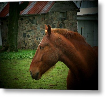 Horse And Shed Metal Print by Michael L Kimble