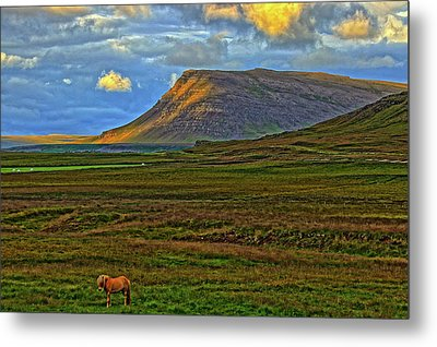 Metal Print featuring the photograph Horse And Sky by Scott Mahon