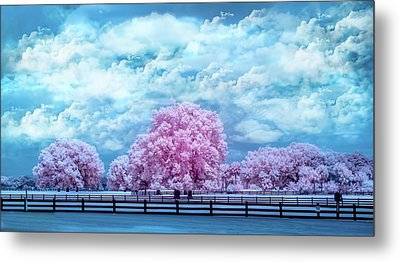 Metal Print featuring the photograph Horse Country In Pink by Louis Ferreira