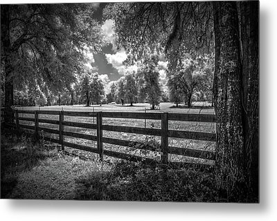 Metal Print featuring the photograph Horse Country by Louis Ferreira