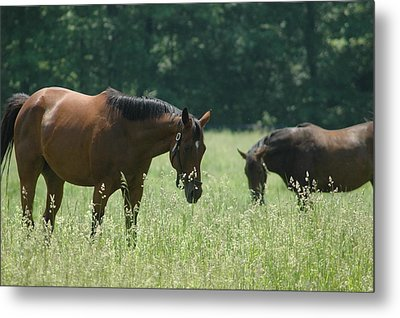 Horse Dreams Tall Grass Metal Print by William A Lopez