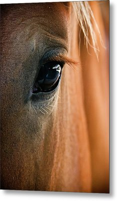 Horse Eye Metal Print by Adam Romanowicz