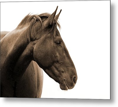 Horse Head Study Metal Print by Heather Swan