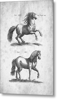 Horse Historiae Naturalis 1657 Metal Print by Aged Pixel
