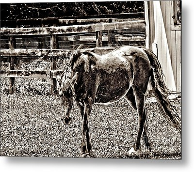 Metal Print featuring the photograph Horse In Black And White by Annie Zeno