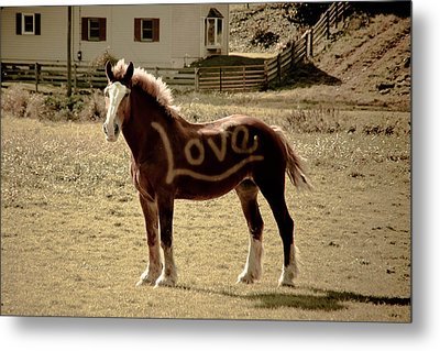 Horse Love Metal Print by Trish Tritz
