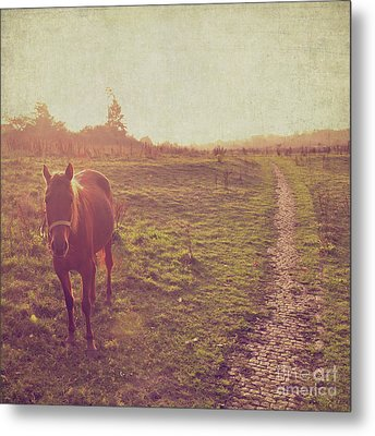 Horse Metal Print by Lyn Randle