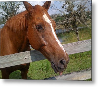 Metal Print featuring the photograph Horse by Michael Albright