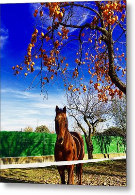 Horse Metal Print by Niki Mastromonaco