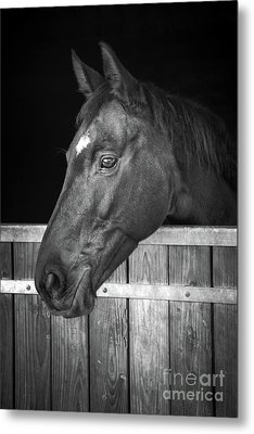 Metal Print featuring the photograph Horse Portrait by Delphimages Photo Creations