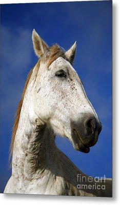 Horse Portrait Metal Print by Gaspar Avila