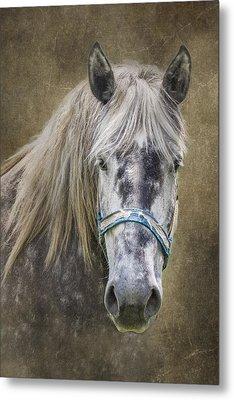 Horse Portrait I Metal Print