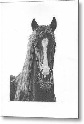 Horse Portrait Metal Print by Sue Olson