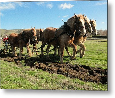 Metal Print featuring the photograph Horse Power by Jeff Swan