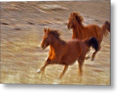Horse Race Metal Print by James Steele