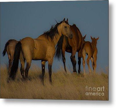 Horses 1 Metal Print