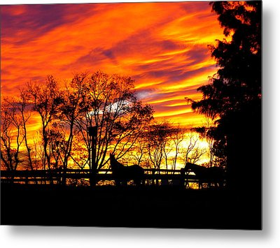 Horses And The Sky Metal Print by Donald C Morgan