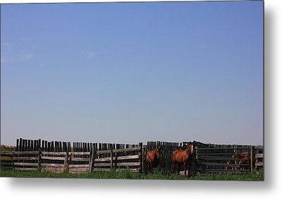 Horses - Corrals - And Alberta Prairie Sky Metal Print by Jim Sauchyn