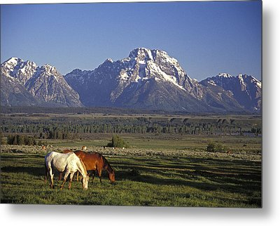 Horses Graze At Lost Creek Ranch Metal Print by Richard Nowitz