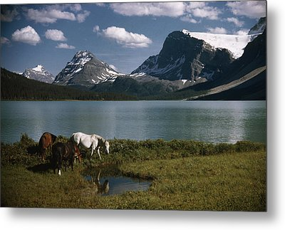 Horses Graze In A Lakeside Meadow Metal Print by Walter Meayers Edwards