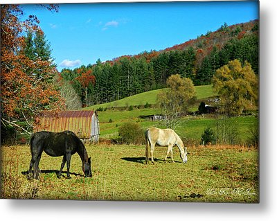 Horses Grazing The Pasture Metal Print