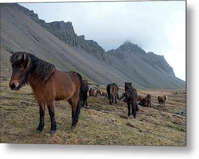 Metal Print featuring the photograph Horses Near Vestrahorn Mountain, Iceland by Dubi Roman