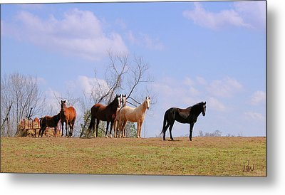 Metal Print featuring the photograph Horses On The Hill by Bonnie Willis