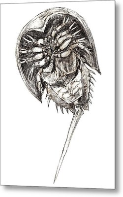 Horseshoe Crab Metal Print