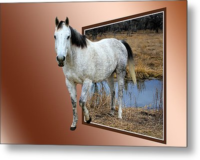 Horsing Around Metal Print by Shane Bechler