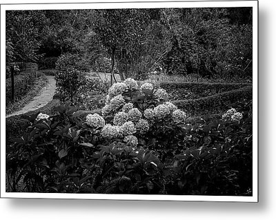 Hortencias-bosque Do Silencio-campos Do Jordao-sp Metal Print