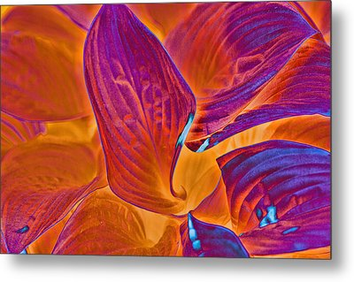 Metal Print featuring the photograph Hostas With Sabattier by Bill Barber
